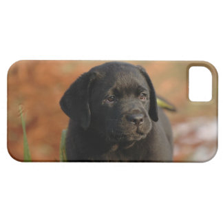 Black lab puppy iPhone SE/5/5s case