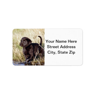Black Lab Puppy Personalized Address Labels