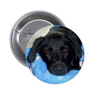 Black Lab Puppy Pinback Button
