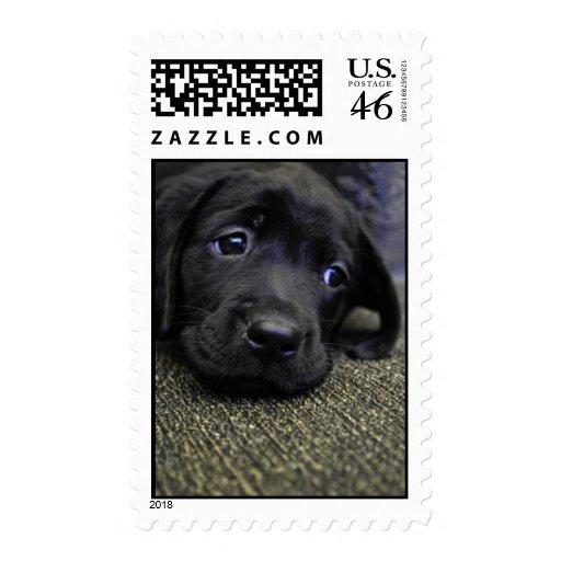 Black Lab puppy Stamps