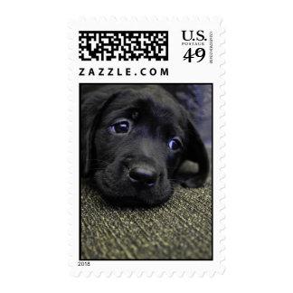Black Lab puppy Postage Stamps