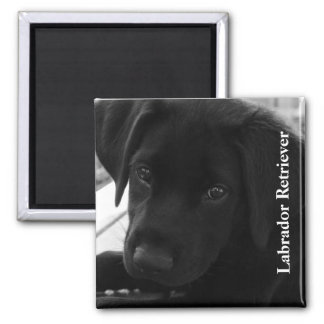 Black Lab Puppy Text 2 Inch Square Magnet