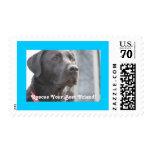 Black Lab Rescue 70 cent stamp