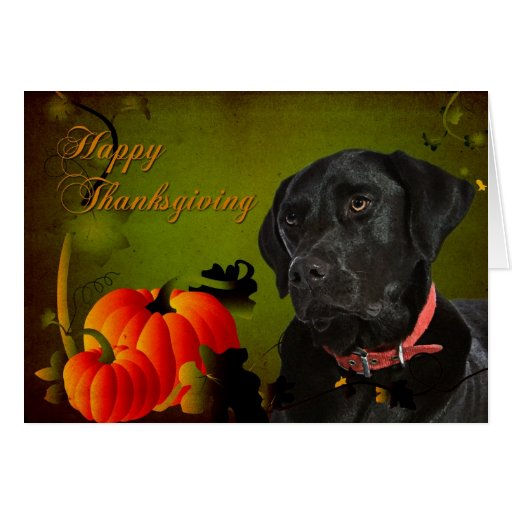 Black Lab Thanksgiving Card