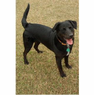 Black Lab Therapy Dog Cutout