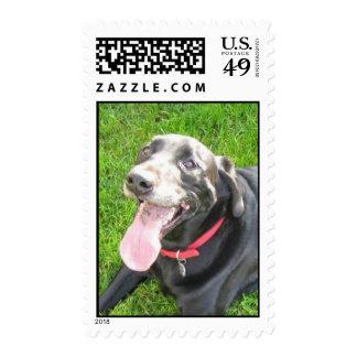 Black Lab Vertical Postage Stamps
