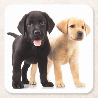 Black Lab Yellow Labrador Retriever Puppy Dog Square Paper Coaster
