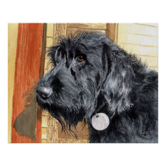 Black Labradoodle #1 Canvas Print