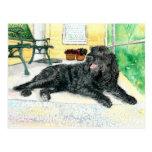 Black Labradoodle Postcard