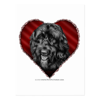 Black Labradoodle with Heart Postcard