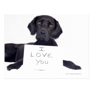Black Labrador 13 Months Postcard