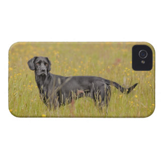 Black labrador 16 Months 2 iPhone 4 Case