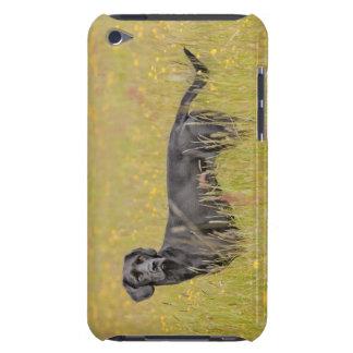 Black labrador 16 Months 2 iPod Case-Mate Case