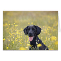 Black labrador 16 Months Card