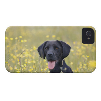 Black labrador 16 Months iPhone 4 Case-Mate Case
