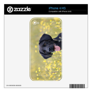 Black labrador 16 Months Skins For iPhone 4S