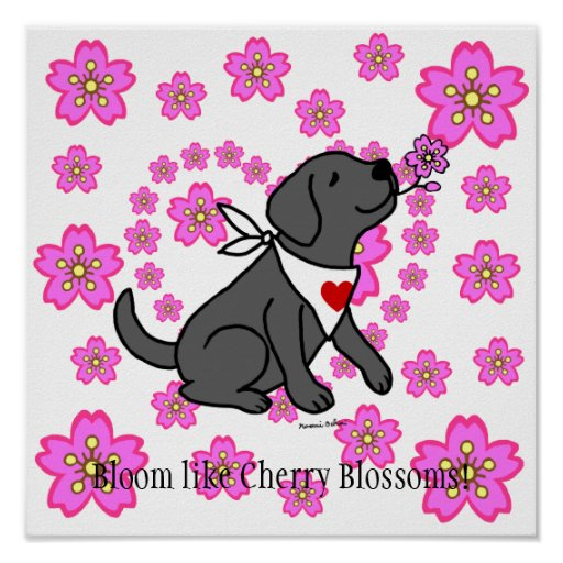 Black Labrador and Cherry Blossoms Poster