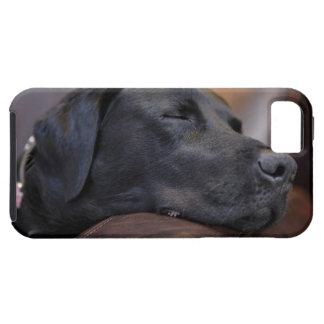 Black labrador asleep on sofa, close-up iPhone SE/5/5s case