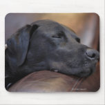 Black labrador asleep on sofa, close-up mouse pad
