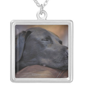Black labrador asleep on sofa, close-up silver plated necklace