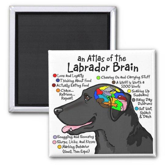 Black Labrador Brain Atlas Magnet