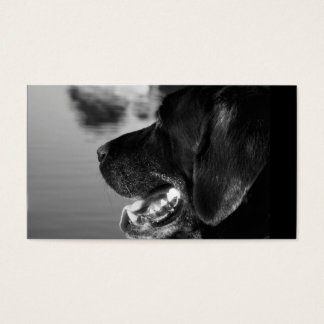 BLACK LABRADOR - Business Card Template