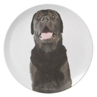 Black Labrador (Canis familiaris), panting, Dinner Plate