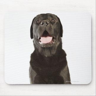Black Labrador (Canis familiaris), panting, Mouse Pad
