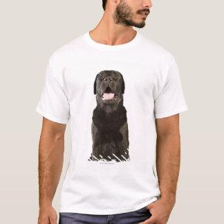 Black Labrador (Canis familiaris), panting, T-Shirt
