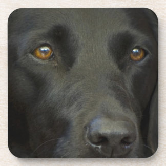 Black Labrador Dog Beverage Coaster
