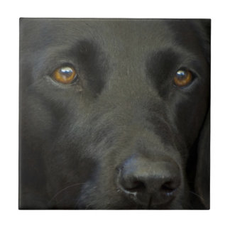 Black Labrador Dog Ceramic Tile