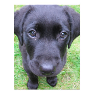 "Black Labrador Dog on Grass 8.5"" X 11"" Flyer"