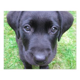 "Black Labrador Dog on Grass 4.5"" X 5.6"" Flyer"