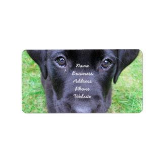 Black Labrador Dog on Grass Label
