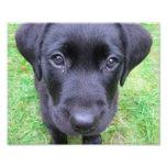 Black Labrador Dog on Grass Photo Print