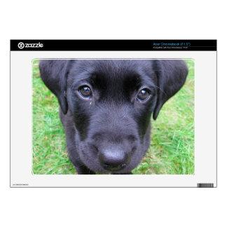 Black Labrador Dog on Grass Skins For Acer Chromebook