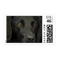 Black Labrador Dog Postage Stamps
