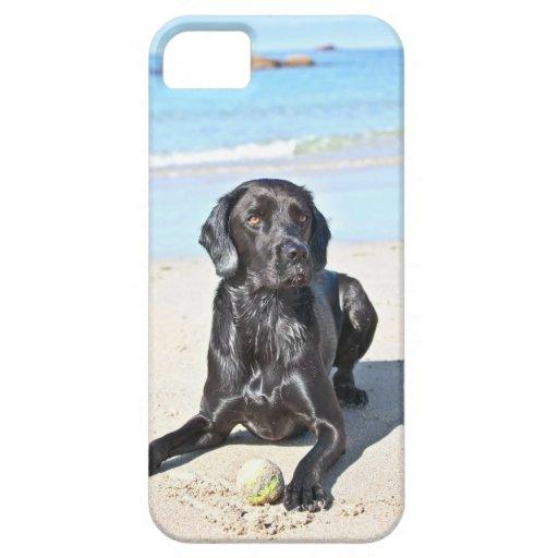 Black Labrador Dog sitting on the Beach iPhone 5 Case