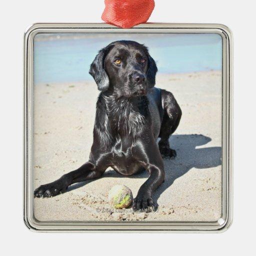 Black Labrador Dog sitting on the Beach Metal Ornament