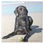 Black Labrador Dog sitting on the Beach Tiles