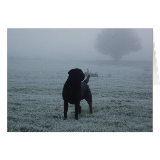 Black Labrador In The Early Morning Frosty Mist Card