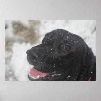 Black Labrador (Lab) Retriever Profile in Winter Poster