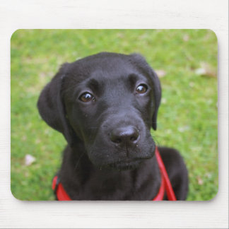 Black Labrador Mouse Mat