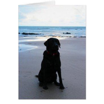 Beach Themed Black Labrador on a beach Card