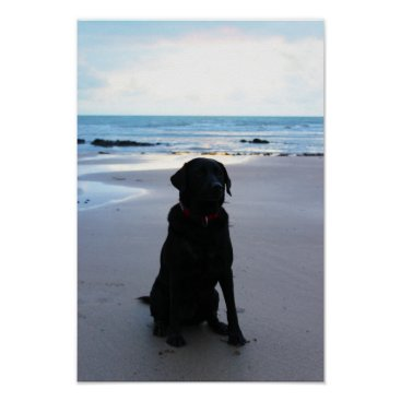 Beach Themed Black Labrador on a beach Poster