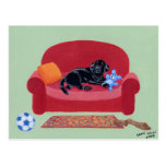 Black Labrador on the pink couch Postcard