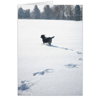 Black Labrador plays in the snow Cards