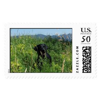 Black Labrador Postage