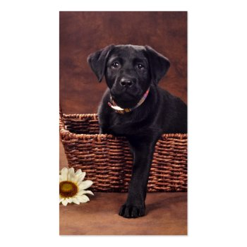 Black Labrador Puppy Dog Business Card Templates