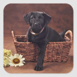 Black Labrador Puppy Dog Square Stickers